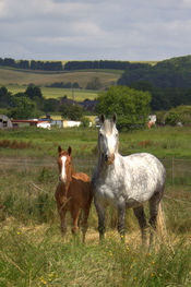 mareandfoal1